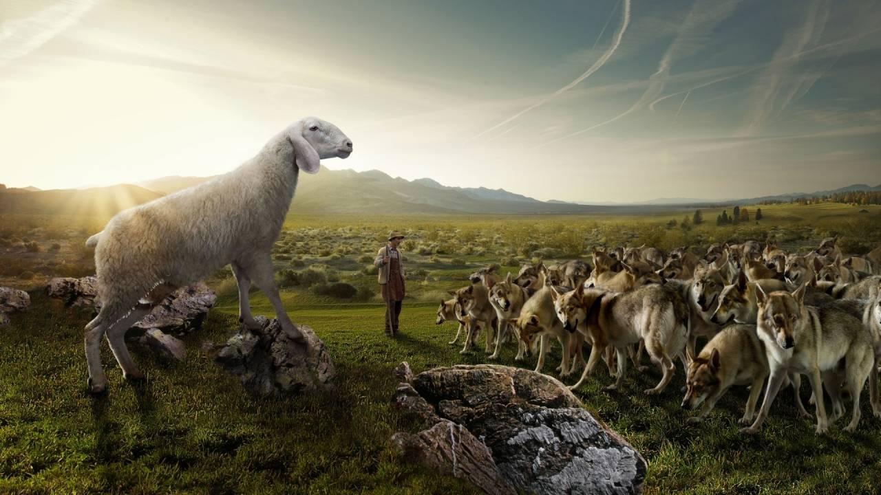 Ovejas lobos